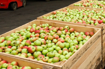 Opening of the harvest season at the Gadz farm. More than 20,000 tons of apples are expected.